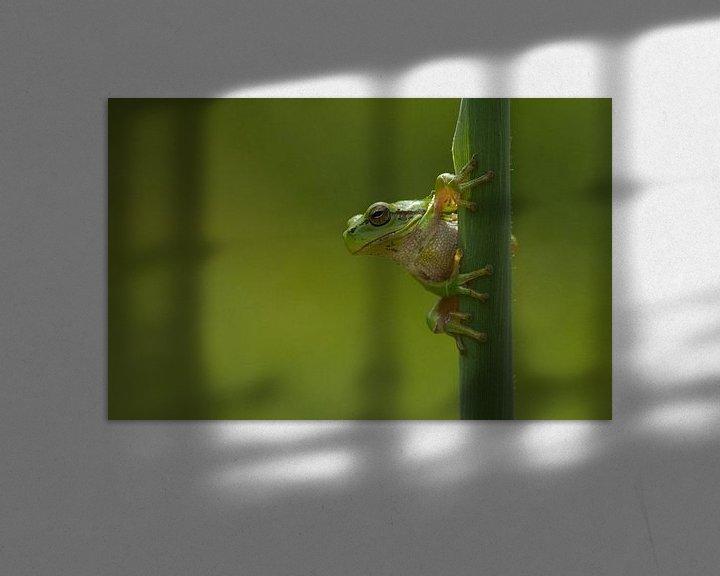 Beispiel: Europäischer Baumfrosch am Schilfrohrstamm von Jeroen Stel