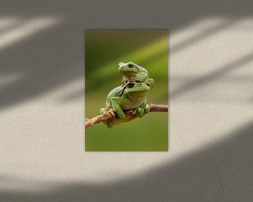 Baumfrosch mit Jungtier auf Ast in Grün von Jeroen Stel