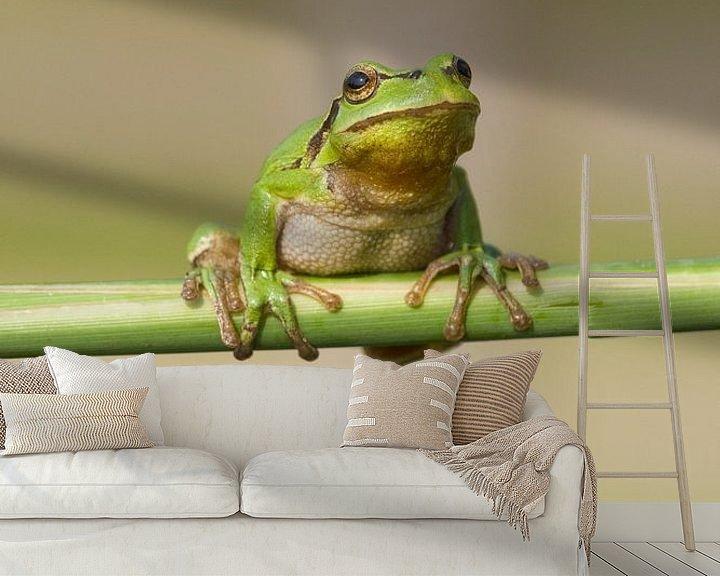 Beispiel fototapete: Baumfrosch am Schilfrohrstiel in grün von Jeroen Stel