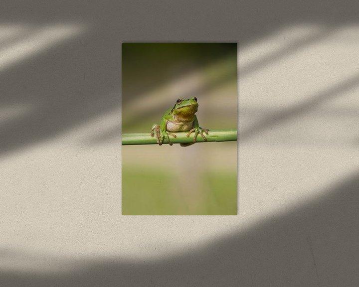 Beispiel: Baumfrosch am Schilfrohrstiel in grün von Jeroen Stel
