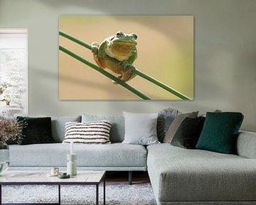 Baumfrosch auf Pitrusgras in Grün von Jeroen Stel