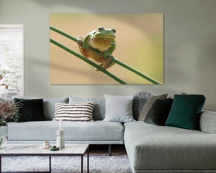 Beispiel: Baumfrosch auf Pitrusgras in Grün von Jeroen Stel