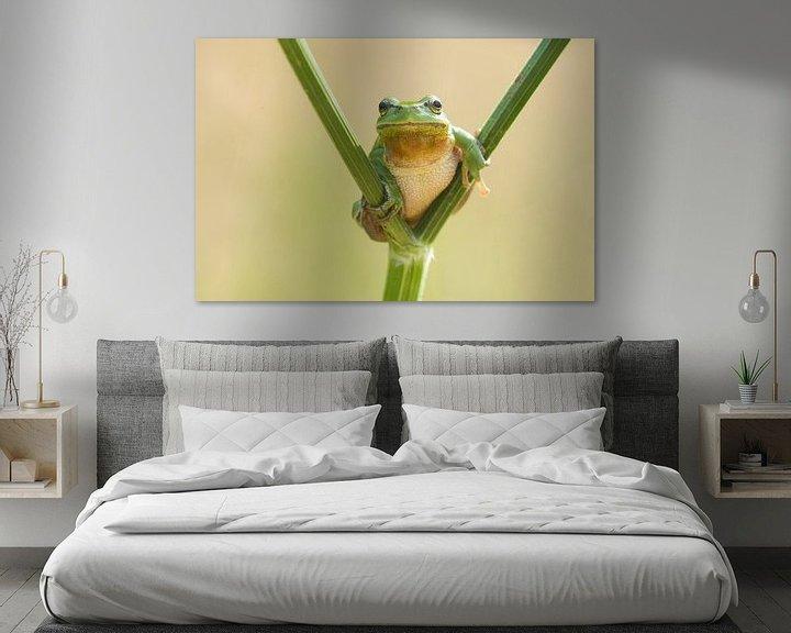 Beispiel: Baumfrosch auf Pfeifenwurz in grün von Jeroen Stel