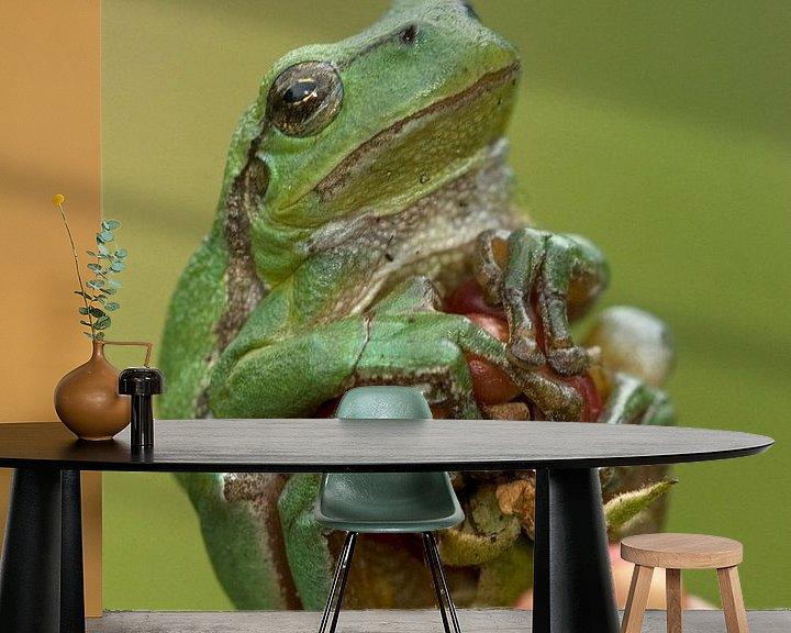 Beispiel fototapete: Baumfrosch auf Brombeere im Brombeerstrauch in der Achterhoek von Jeroen Stel