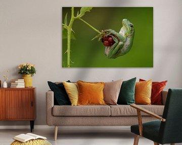 Baumfrosch auf Brombeeren im Brombeerstrauch in der Achterhoek von Jeroen Stel
