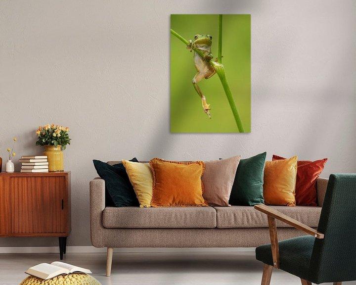 Beispiel: Baumfrosch am Pfeifenwurm in der Achterhoek von Jeroen Stel