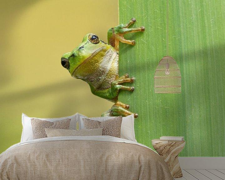 Beispiel fototapete: Baumfrosch schaut um die Ecke von hinten Schilfblatt von Jeroen Stel