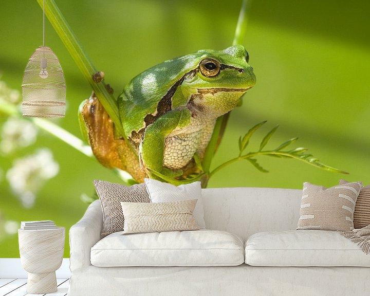 Beispiel fototapete: Baumfrosch klettert im Whistlebug. von Jeroen Stel