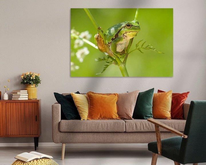 Beispiel: Baumfrosch klettert im Whistlebug. von Jeroen Stel