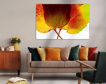 Herfstbladeren1 van Henk Leijen