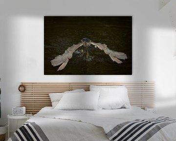 Fischerschnatter von Freddy Van den Buijs