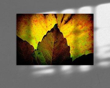Herfstbladeren 12 van Henk Leijen