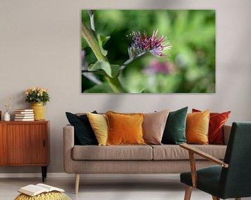 Bürstenblume von Stijn Cleynhens