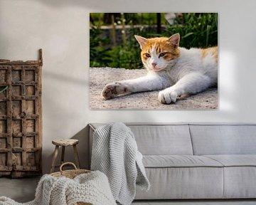 Kat in de avondzon van Stijn Cleynhens