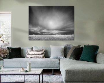 Graanveld in infrarood