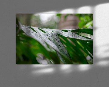 Waterdruppels op een groen blad. Close-up met zachte onscherpe randen. Levendige groene kleuren acht van Tjeerd Kruse