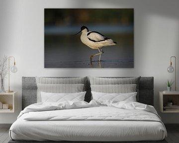 Kluut in Hollandse ochtendzon van Pingüino Fotografie