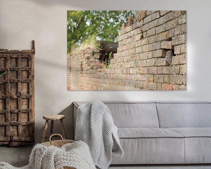 Beispiel: Kleine Eule in verfallener alter Mauer von Jeroen Stel
