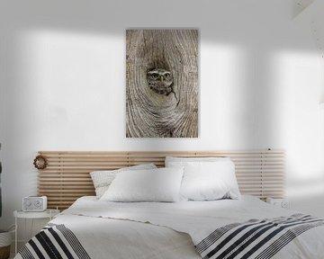 Peek-a-boo ! Chouette chevêche regardant par le trou dans le tronc d'un arbre sur Jeroen Stel