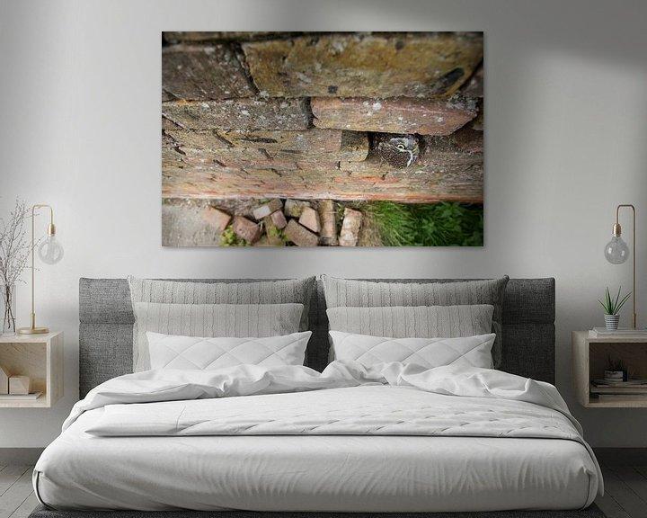 Beispiel: Kuckuck, kuckuck! Die kleine Eule schaut aus der alten verfallenen Wand auf. von Jeroen Stel