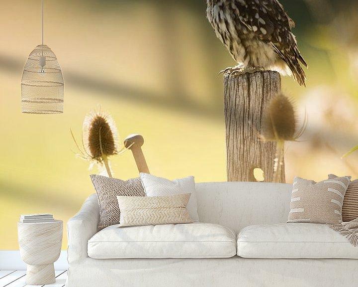Beispiel fototapete: Kleine Eule auf Stelzen im Abendlicht zwischen Disteln von Jeroen Stel