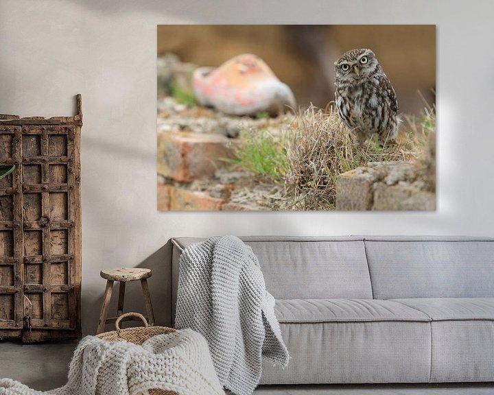 Beispiel: Kleine Eule an der alten Wand mit Verstopfung von Jeroen Stel