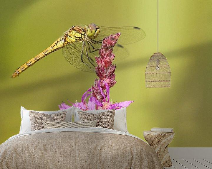 Beispiel fototapete: Ziegelroter Heidelibel auf Zopfblume von Jeroen Stel