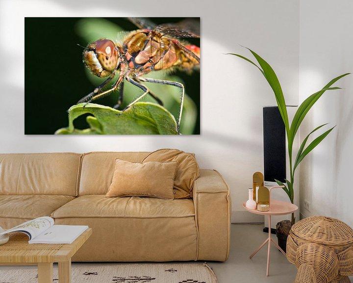 Beispiel: Steinroter Heidelibel auf Eichenblatt von Jeroen Stel