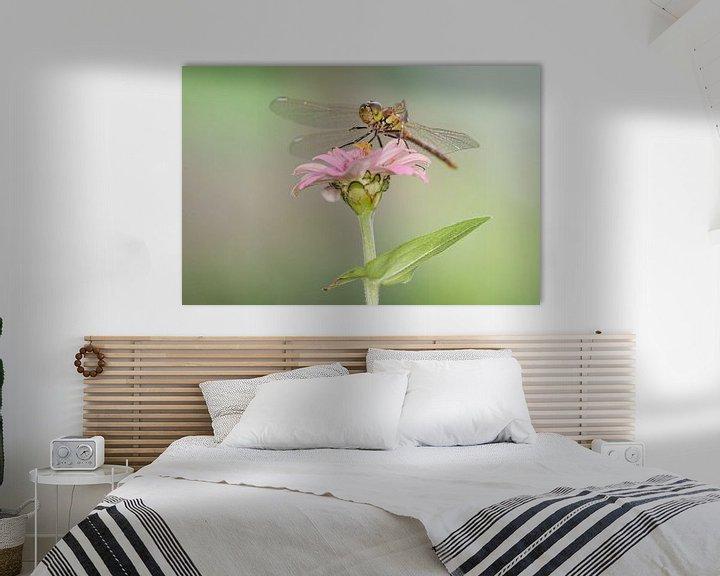 Beispiel: Ziegelroter Heidelibel auf Blume von Jeroen Stel