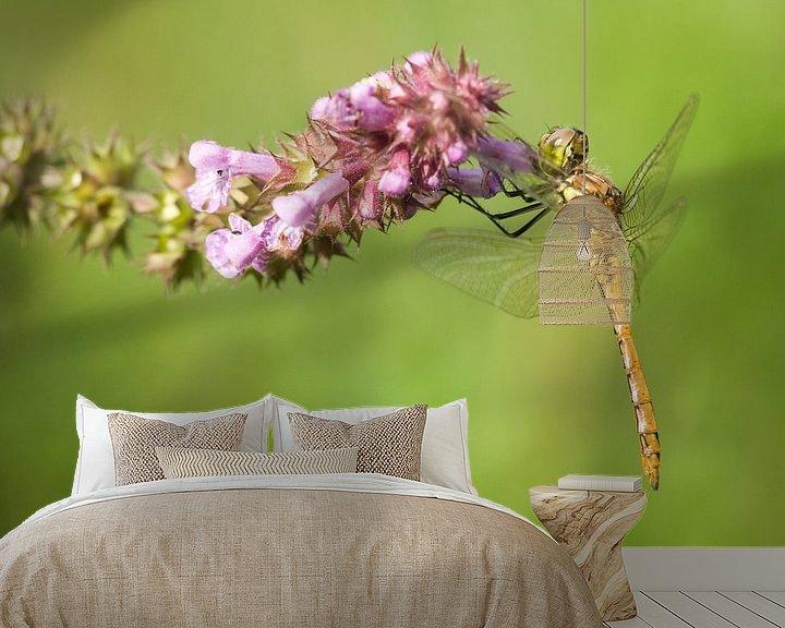 Sfeerimpressie behang: Steenrode Heidelibel op bloem van Jeroen Stel