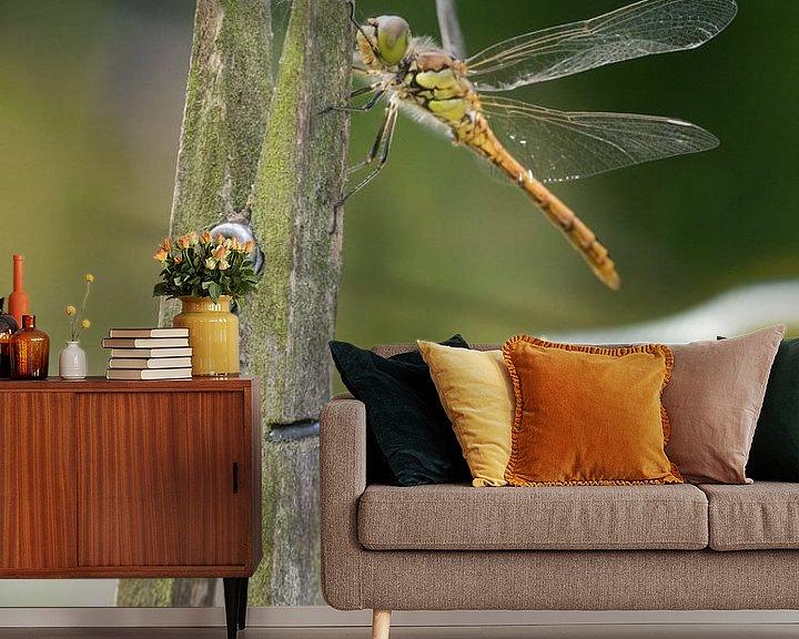 Beispiel fototapete: Steinroter Heidelibel auf Wäscheklammer von Jeroen Stel