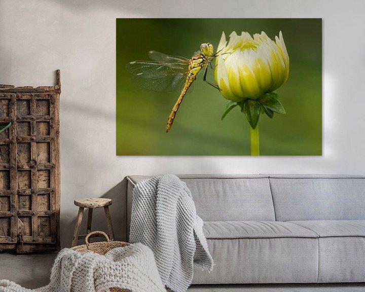 Sfeerimpressie: Steenrode Heidelibel op bloem van Jeroen Stel