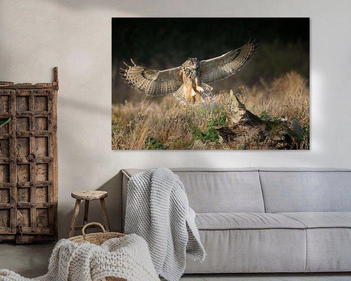 Sfeerimpressie: Oehoe in vlucht over hooiland van Jeroen Stel