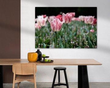 Tulpe | Keukenhof von Laura Maessen