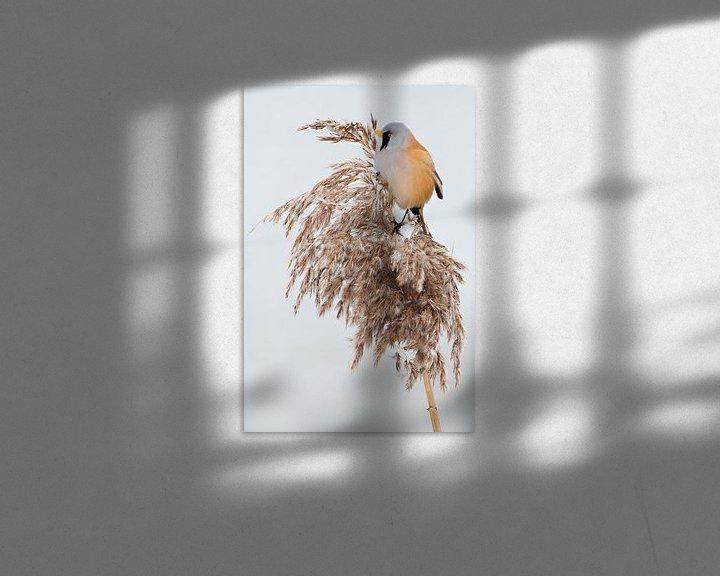 Sfeerimpressie: Baardman in het riet in de winter van Jeroen Stel