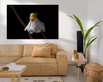 weiße Regenblume von Tania Perneel