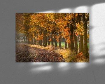 Herfst Laantje van Joep de Groot