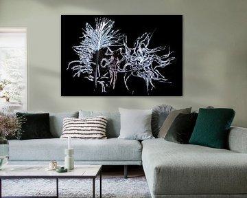 Daunenfedern im Eis. von AGAMI Photo Agency