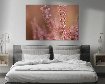 warme Heidekrautblume von Tania Perneel