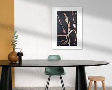 Botanische Pflanzen und Blumen drucken, Gräser von Angela Peters