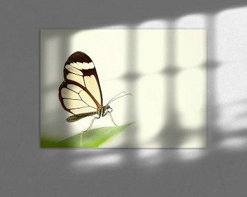 Nahaufnahme eines Schmetterlings von Caroline van der Vecht