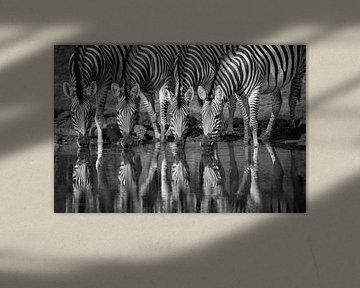 Vier Zebras, die Seite an Seite trinken, in Schwarz-Weiß. von Caroline van der Vecht
