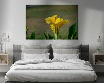 De gele bloem van Joerg Keller