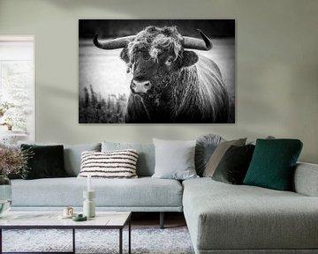 Schottischer Highlander-Stier von Arie Jan van Termeij