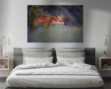 Fuchs von Pim Leijen