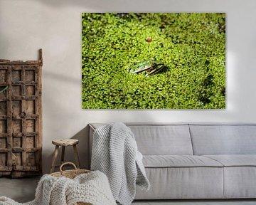 Kikkertje in het groen van Shirley Douwstra