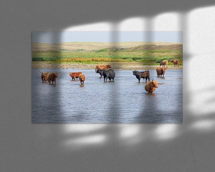 Sfeerimpressie: Schotse Hooglanders op Texel. van Justin Sinner Pictures ( Fotograaf op Texel)