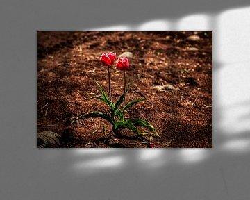 Wilde Tulpen auf der Veluwe von Liberty Ragazza Biesma