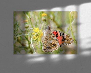 Schöner Distelfalter Schmetterling von Fotografie Jeronimo