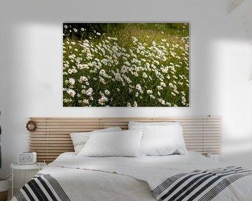 Margaritenblüte von Harald Schottner